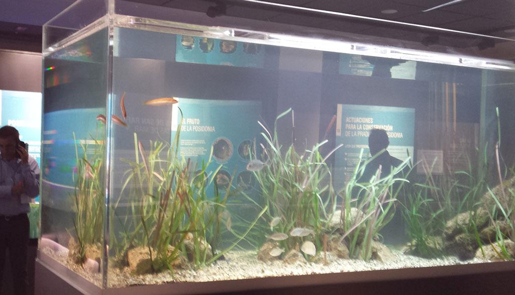 Acuarios para peces