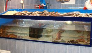 Acuarios para pescaderias y supermercados