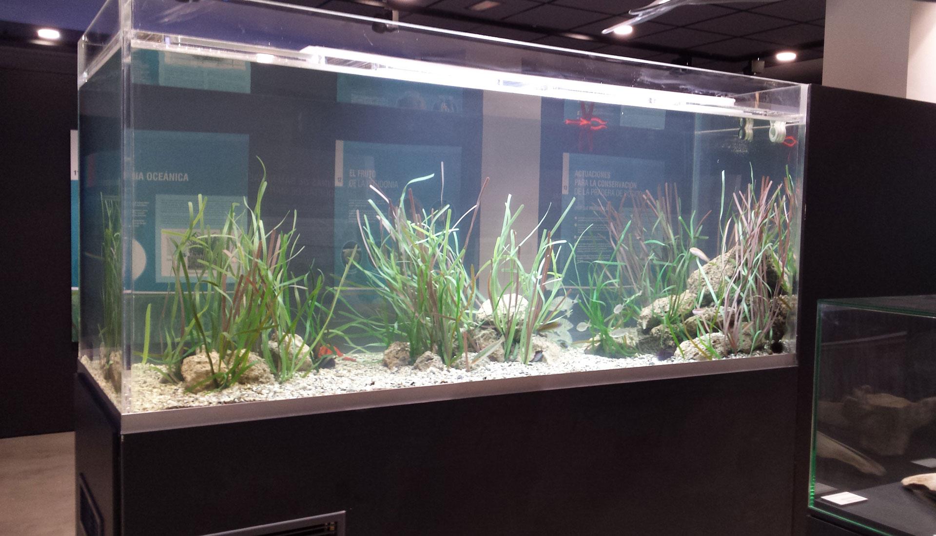 Acuarios catro depuradoras cet reas acuarios y viveros for Acuarios ornamentales